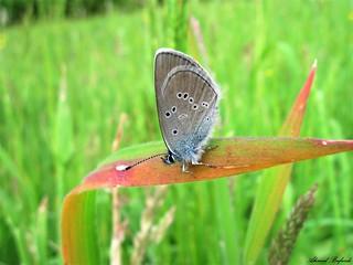 Butterfly 1493