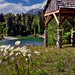 A Picturesque Setting for Daisies Along the Stehekin River (Lake Chelan National Recreation Area)