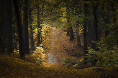 take me higher (bartharmsenfotografie) Tags: 2017 montferland gelderland achterhoek nature natuur landschap landscape forest bos herfst autumn colors kleuren oranje