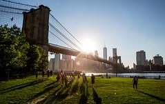 Brooklyn Bridge sunset [Explored] (_Franck Michel_) Tags: bridge shadow sun park buildings usa bird grass river skyline