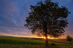 Sunrise (Jürgen Mayer) Tags: baum tree landschaft landscape himmel sky herbst autum fall natur nature sonnenaufgang sunrise sonne sun morgen morning pentax pentaxk5 sigma sigma4556816 wideangle weitwinkel pentaflife pentaxart bayern bavaria wunsiedel