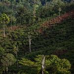 GCS-Tenure Project in Lampung thumbnail