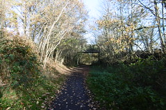 Silkstone - Wath old railway    November 2017 (dave_attrill) Tags: silkstonecommon incline 1in40 great central railway electrified woodhead sheffield victoria manchester picadilly closed 1970 1955 stocksbridge engine transpennine upper don trail penistone wortley wadsley neepsend dunford bridge thurgoland tunnel oxspring barnsley junction huddersfield allweather cycleway bridleway footpath remains silkstone 2016 1981 dove valley no1 road tree grass sky worsbroughbranch
