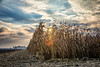 Light in the cornfield (Michał Banach) Tags: wielkopolska autumn corn cornfields countryside fields jesień pola wieś outdoor outside light sun sunset clouds
