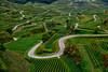 Snakey (Don César) Tags: alemania deutschland germany europe kaisersthul hills vineyards lines lineas vino wein wine sembradios parras viñedos badenwürttemberg