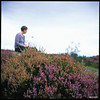 Kate drawing in the heather (James Mundie) Tags: jamesmundie jamesgmundie profjasmundie jimmundie mundie copyright©jamesgmundieallrightsreserved copyrightprotected yashicaa tlr twinlensreflex cashelfarm creagliath lochlomond scotland milarrochy uk unitedkingdom heather