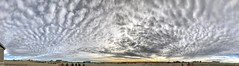 Cloudscape_Altocumulus (northern_nights) Tags: cloudscape altocumulus clouds sky pano panorama cheyenne wyoming iphone7plus