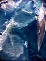 Oil painting dolphins. Bubbles.