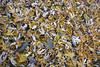 Maple Remains (kendoman26) Tags: topazdetail topazsoftware leaves mapleleaves autumn autumncolors fall fallcolors nikon nikond7100 tokinaatx1228prodx tokina tokina1228