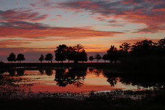 Vibrant sunset sky over lake and pond - Explore! (Monceau) Tags: sunset lakepontchartrain fountainebleaustatepark mandeville louisiana vivid 117finishingtouches 117picturesin2017 sky tree water explore explored