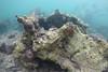 20150418-SCB-other photos-77.jpg (UWC Coral Monitoring) Tags: diadema seaurchin lpcuwc coraldead hoihawan coralmonitoring coralbeach cm hhw lipochununitedworldcollege 海下 海下灣
