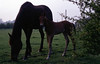 img002 (foundin_a_attic) Tags: horse 1970s hourse