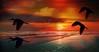 Beach Flight (beachpeepsrus) Tags: ibis birds beach california clouds color flight longbeachcalifornia longbeachgranprix light shore sky sunrise sun