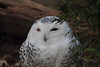 IMG_2748 (neatnessdotcom) Tags: new york city nyc bronx zoo tamron 18270mm f3563 di ii vc pzd canon eos rebel t2i 550d