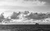 Offshore sky (daniel.gogberg) Tags: himmel offshore sky hav vatten water ocean oilrig norway sony rx100 sonyrx100 rx100mk3 rx sonyrx bw blackandwhite svartvitt