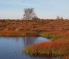 2017_11_0296 (petermit2) Tags: hatfieldmoors hatfield lindholme doncaster southyorkshire yorkshire peat bog humberheadpeatlands humberhead naturalengland nnr