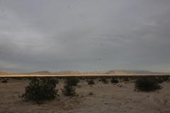 _MG_5043 (Gibrán Nafarrate) Tags: laguna salada bajacalifornia lagunasalada baja vw volkswagen desert desierto nature camping canon