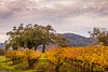 Sunset in the Vineyards (allentimothy1947) Tags: california hwy12 kenwood kundewinery sonomacounty landscape sonomavalley vines vineyards sunset