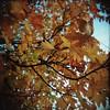 (a walk across the rooftops) Tags: kodak film holga 120 analog analogue color vibey ethereal trees leaves fall portland oregon exploregon greenery outdoors alec eagon