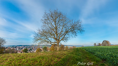 Landscape with tree (Peter Goll thx for +5.000.000 views) Tags: 2017 badbirnbach urlaub germany tree landscape herbst autumn sky himmel blau blue cloud wolke nikon nikkor weitwinkel d800