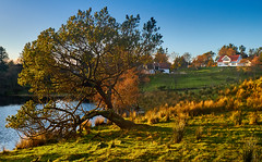 Ramsdalen, Haugesund - Norway (Vest der ute) Tags: xt2 norway rogaland haugesund grass trees tree houses water landscape lake outdoor fall autumn afternoon bluesky farm fav25 fav200