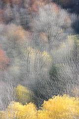 Elementale Autunnale (Michele Fornaciari) Tags: d800 autumn autunno fall tree colori colors nature double exposure nikon nikkor