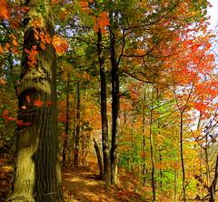 Escarpment Rail Trail (Lois McNaught) Tags: escarpmentrailtrail scene landscape autumn fall trees trail hamilton ontario canada nature foliage