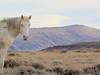 This is My Home (chad.hanson) Tags: wildhorses mustangs wildlife wyoming stewartcreekhma