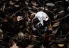 Regreso a la tierra // Back to earth (Cazadora de Fotos) Tags: calavera skull