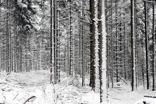 winter is here II