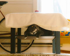 melvin hiding (kc_tinari) Tags: cat cats kitty kitties feline sunbathing pets home personal