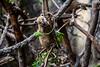 Coati (melanie-pictures) Tags: animaux bebe zoo pontscorff canon