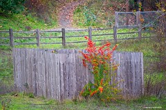 Multi fence - HFF! (JSB PHOTOGRAPHS) Tags: jsb1657 multi fence nikon d600 28300mm deltaponds eugeneoregon trail park happyfencefriday fencefriday hff grass red green