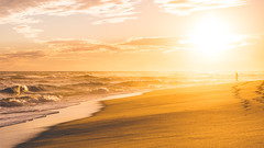 Katama, south beach, MV (awalkintothefray) Tags: emma katama marthasvineyard southbeach sunset hiking beach sun waves ocean girl cute dogs doggo doggy puppy puppies doglife beachlife lightroom warm beachshots sunssetshots sunsethub sunsetlover usa america cutegirl cutedog