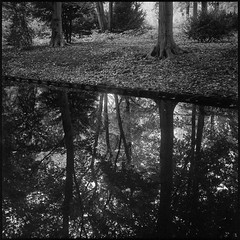 The Upside Down (argentography) Tags: yashica124 berlin tiergarten ilford hp5 park monochrome reflection