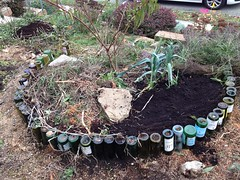Late fall garden (lady-ursula) Tags: peach coffeegrounds starbucks compost garlicpatch leeks