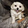 Bella And Her Traveling Dog Biscuit (marilyntunaitis) Tags: bella biscuit
