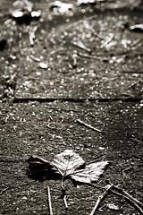 Autumn Street (NathalieSt) Tags: europe france hérault lagrandemotte languedocroussillon occitanie automne autumn feuille leaf nature nikon nikond750 nikonpassion nikonphotography languedocroussillonmidipyrén languedocroussillonmidipyrénées fr