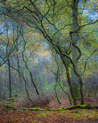 Winding, twisting and turning (Ingeborg Ruyken) Tags: dropbox autumn november rosmalen bomen trees forest bos 500pxs fall natuurfotografie 2017 rosmalensezandverstuiving flickr herfst