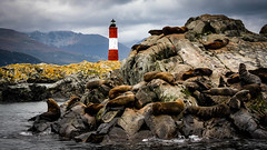 Seals in the Beagle Channel. (icarium82) Tags: canoneos450d wildlife landscape water travel nature landschaftterrain tieranimal ushuaia beaglechannel island rock tierradelfuego argentina southamerica seal animal lighthouse sailing darwin anisotropicdiffusion mountains clouds sundaylights