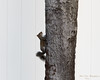 Local Squirrel_2017-11-16-168512 (robertlesterphotography) Tags: 40x150 ap aroundthehouse clearwaterfl20171116raw fslr m1 raw rodents squirel