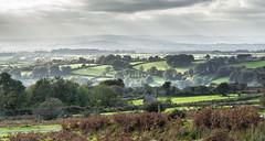 The Walkham Valley on Dartmoor- NK2_4557 (Jean Fry) Tags: dartmoor dartmoornationalpark devon englanduk moorland nationalparks trees uk walkhamvalley westcountry misty