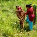 Women going to harvest lemongrass
