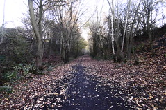 Former railway cutting, Dodworth    Silkstone - Wath old railway    November 2017 (dave_attrill) Tags: cutting dodworth great central railway electrified woodhead sheffield victoria manchester picadilly closed 1970 1955 stocksbridge engine transpennine upper don trail penistone wortley wadsley neepsend dunford bridge thurgoland tunnel oxspring barnsley junction huddersfield allweather cycleway bridleway footpath remains silkstone 2016 1981 dove valley no1 road tr worsbroughbranch
