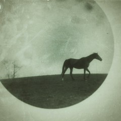 walking (Jen MacNeill) Tags: snapseed film microscope experimental alternative 35mm horse horses equine art littledoglaughednoiret