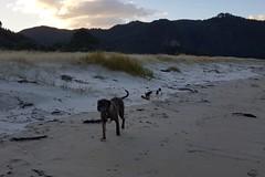 Strandspaziergang mit den Einheimischen. Der Strang gehört definitiv Buff und Izzy.