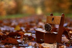 Let's rest (annazelei) Tags: canon eos fall autumn november rest bank outdoor natura nature natural path dof flickr friday new landsape walking forest wooden wood colourful colour color detail macro macroworld depthoffield bokeh pine cone naturaleza macromonday brown yellow golden play