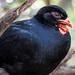 Black bird with orange beak