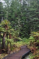 The Redwoods (othree) Tags: newzeland redwoods rotorua