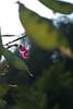 (latositti) Tags: latositti bologna botanicalgarden ortobotanico